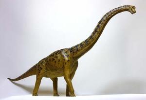 Brachiosaurus2010cmm
